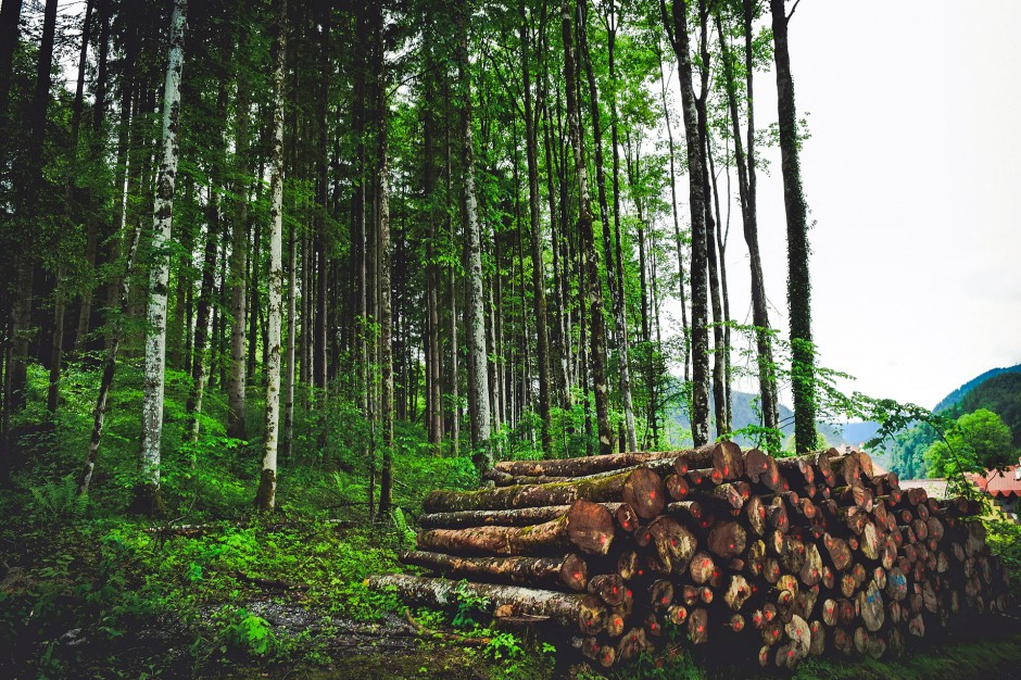 Wycinka drzew, PSL: Nowe prawo to bubel
