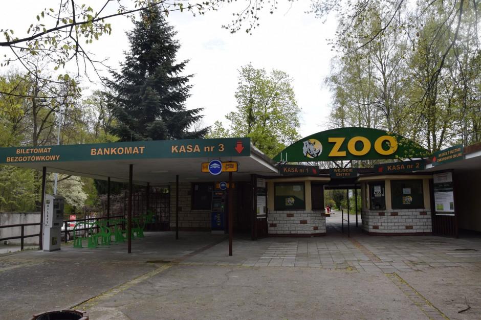 Zoo w Poznaniu ma problem. Może stracić status jednostki zatwierdzonej