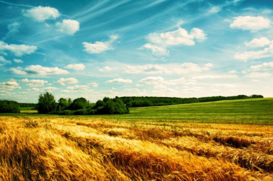 Cudzoziemcy kupują ziemie. W których województwach najchętniej?