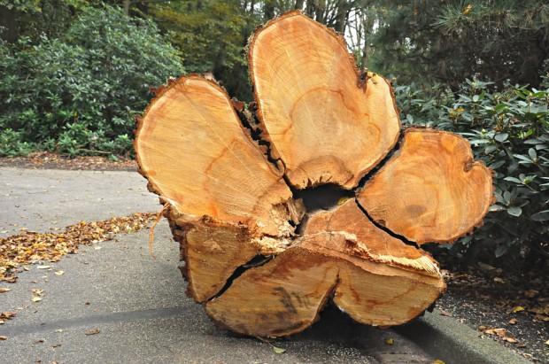Wycinka: projekt rozporządzenia o nowych stawki opłat za usunięcie drzew i krzewów