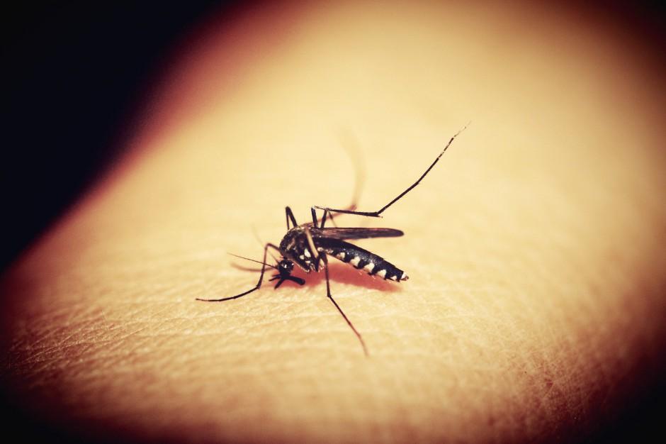 Radom: Walka z kleszczami i komarami za pieniądze z budżetu obywatelskiego