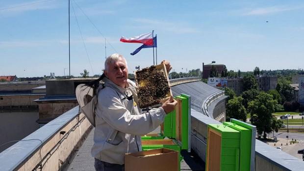 Pasieka na dachu Dolnośląskiego Urzędu Wojewódzkiego