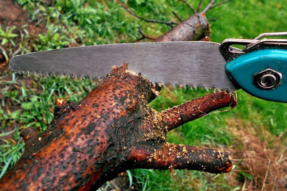 Weszły w życie zaostrzone przepisy ws. wycinki drzew