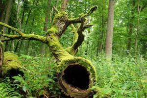 Przeciwnicy wycinki drzew w Puszczy Białowieskiej manifestowali w Warszawie