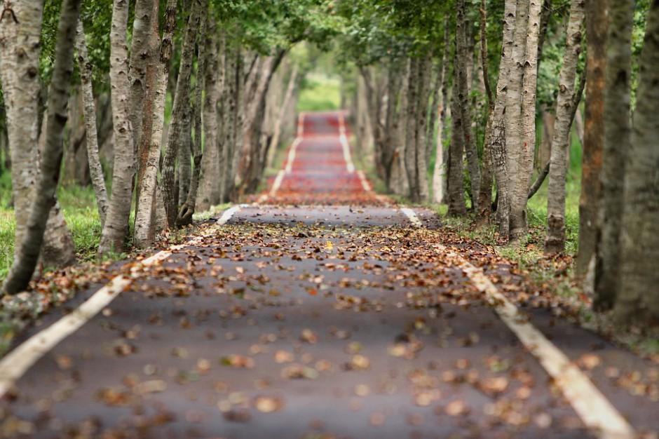 Opłaty za wycinkę drzew i krzewów: Jest rozporządzenie Ministra Środowiska
