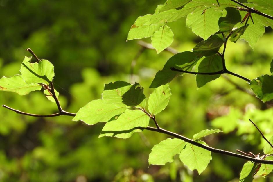 Kraków: Las Borkowski będzie oficjalnie lasem?