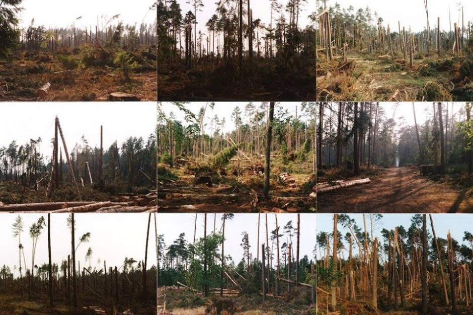 Śląskie: Obraz po burzy, czyli zniszczonych 1500 ha lasów, w tym 800 doszczętnie
