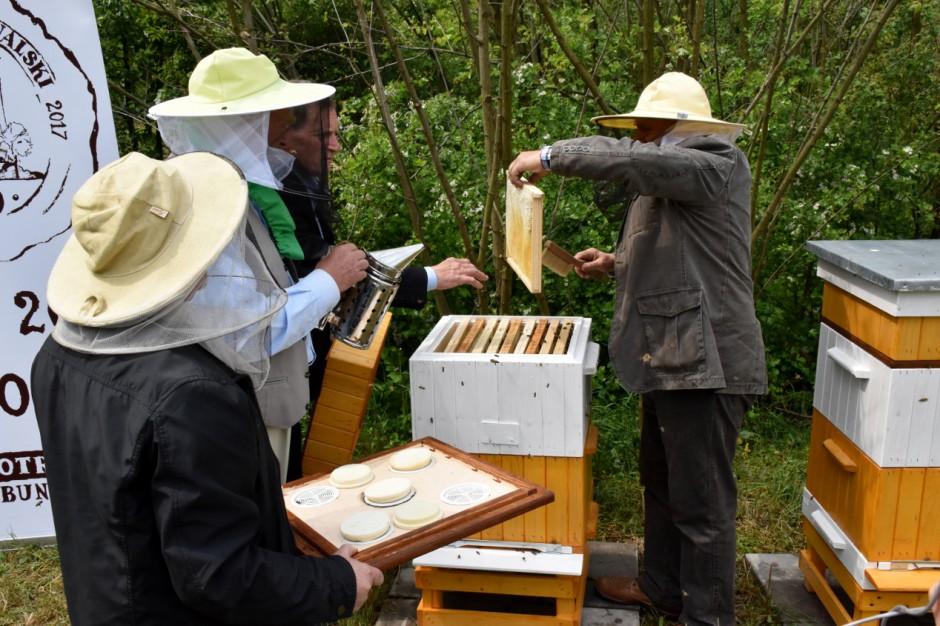 Posłowie Kukiz'15 pytają o pszczoły w miastach. Chcą jednolitych przepisów