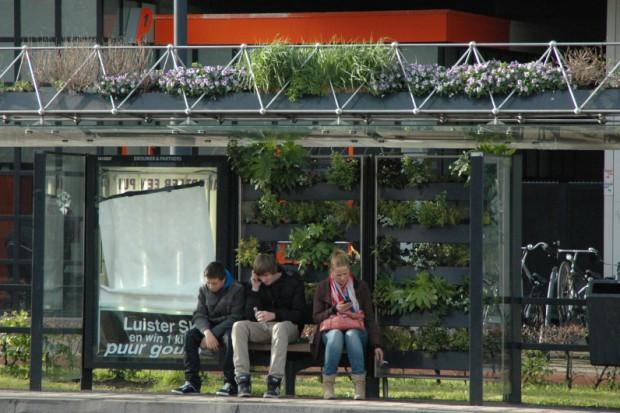 Wrocław: Zielone przystanki sposobem na smog