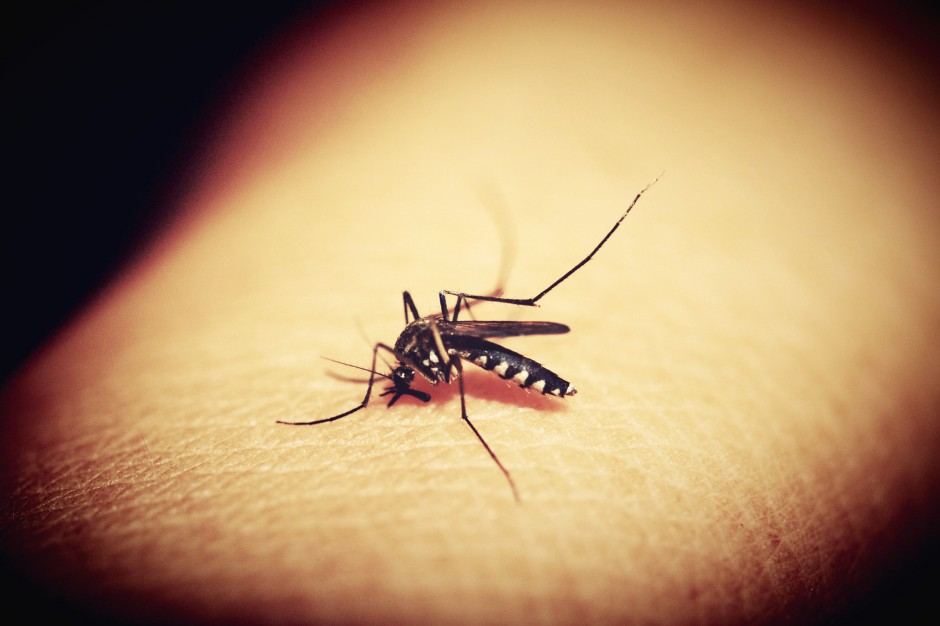 Katowice przeprowadzą opryski przeciw kleszczom i komarom