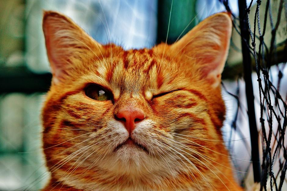 Warmińsko-mazurskie: Proces sołtysa obwinionego o wypuszczenie kota bez nadzoru