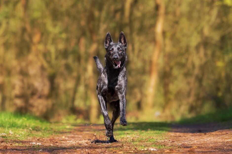 Lublin nie wpuszcza psów do parku. Sąd stoi po stronie miasta
