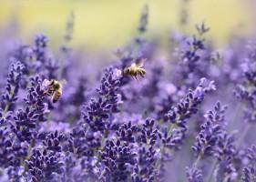 Samorządy założą ponad tysiąc stołówek dla pszczół