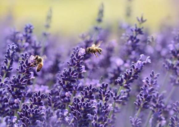 Samorządy na pomoc pszczołom. Założą ponad tysiąc pszczelich stołówek