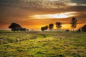 Powstanie strategia rozwoju rolnictwa i obszarów wiejskich