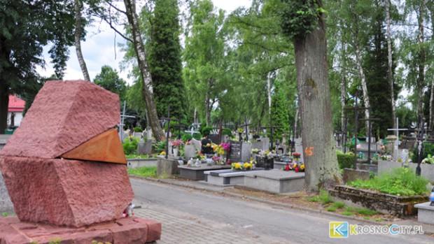 Krosno: Marszałek zdecyduje o losie 135 drzew