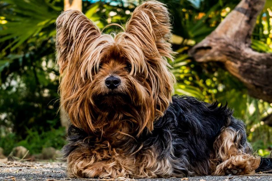 Będą nowe przepisy dotyczące rejestracji psów i kotów?