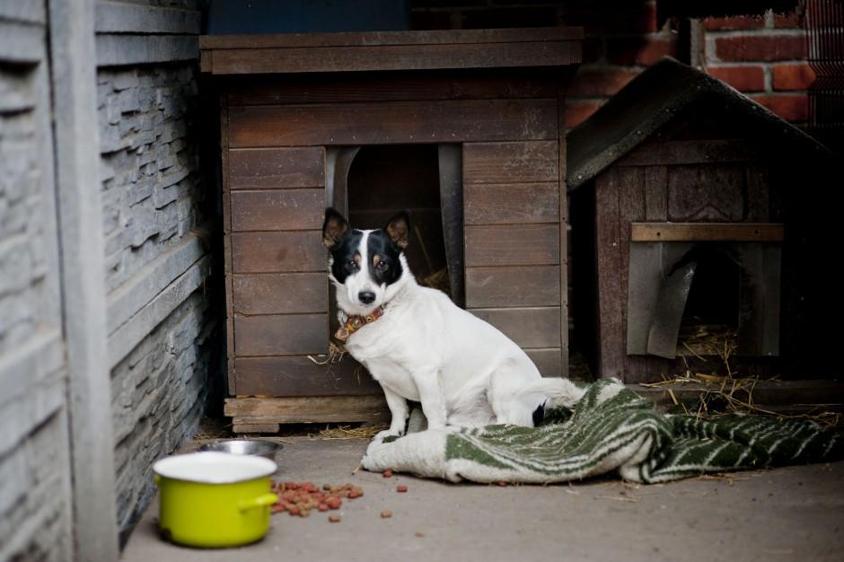 Kalisz: Przy schronisku powstanie szpital dla zwierząt