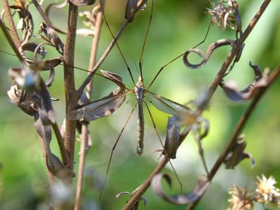 Rzeszów walczy z kleszczami i komarami opryskami