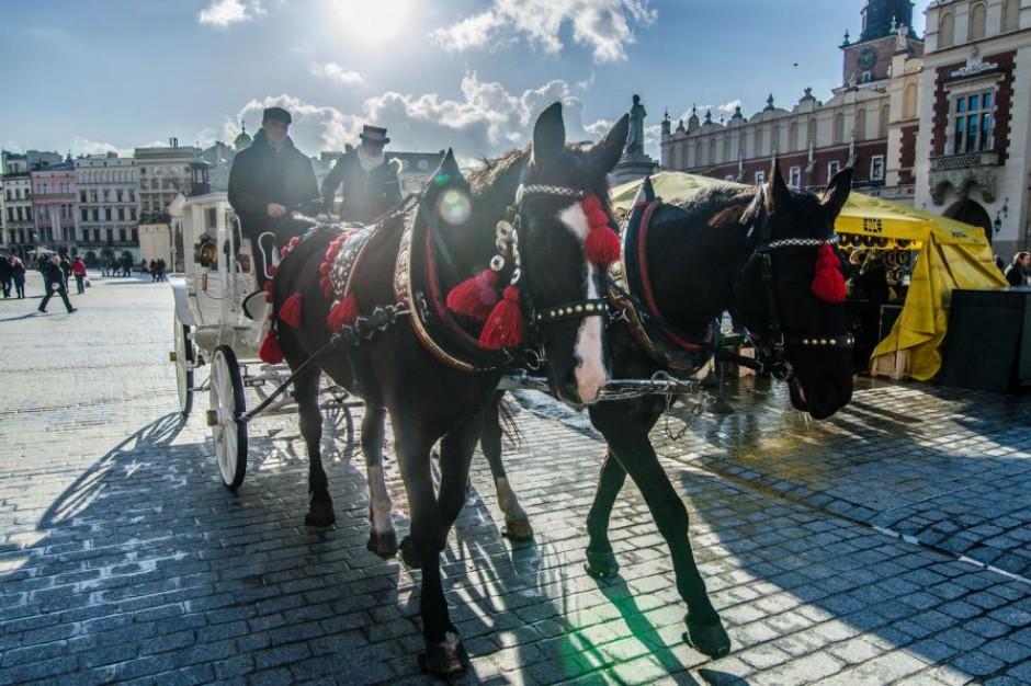 Zakaz postoju dorożek na krakowskim rynku. Wszystko przez upał
