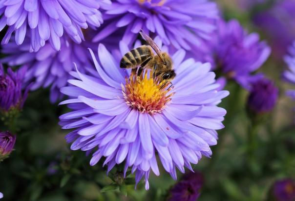 Ciechanów ma propozycje dla owadów. Na ratuszu stanie pasieka