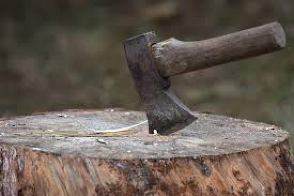 Częstochowa: Złota siekiera dla zarządu dróg. Antynagroda za wycinkę drzew przyznana