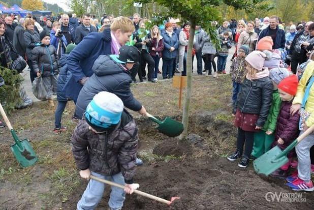 """Ostrów Wielkopolski z nagrodą """"Czarodziejskie Drzewo 2017"""". Drugi rok z rzędu posadził najwięcej drzew"""