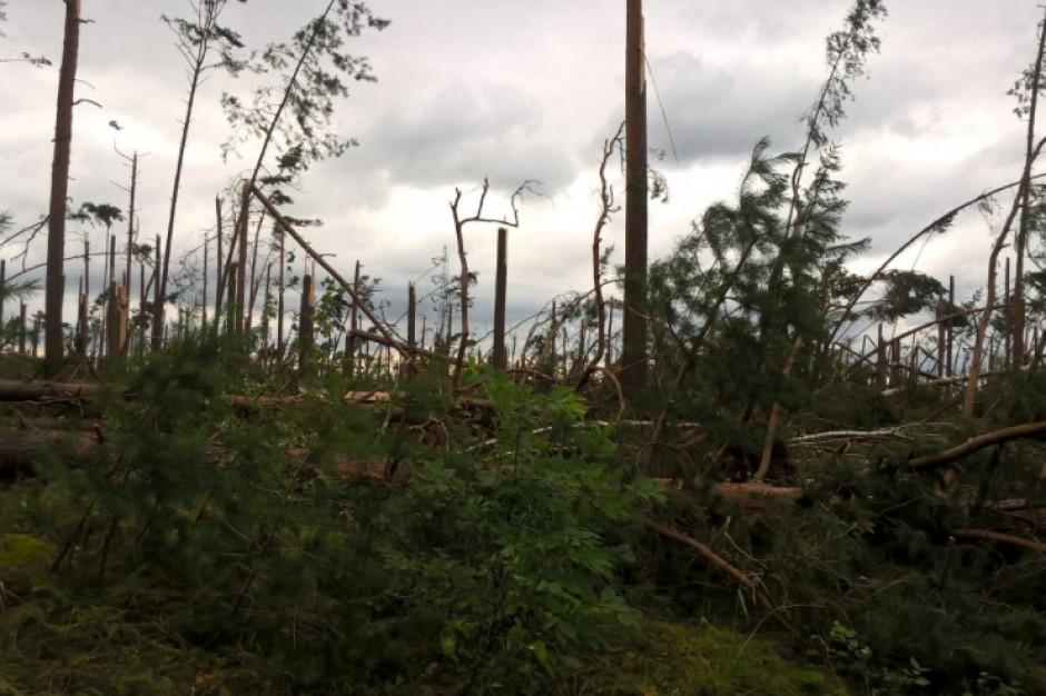Lasy Państwowe oszacowały straty po przejściu nawałnic. Zniknęło 26 tysięcy hektarów lasów!
