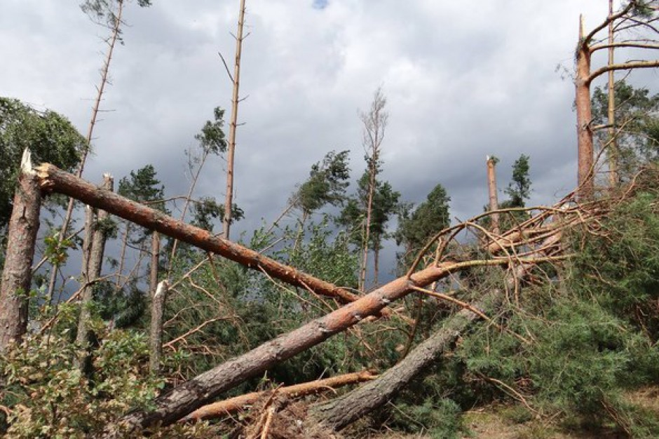 Lasy Państwowe: Sprzątanie terenów dotkniętych nawałnicami potrwa do 2019 r.
