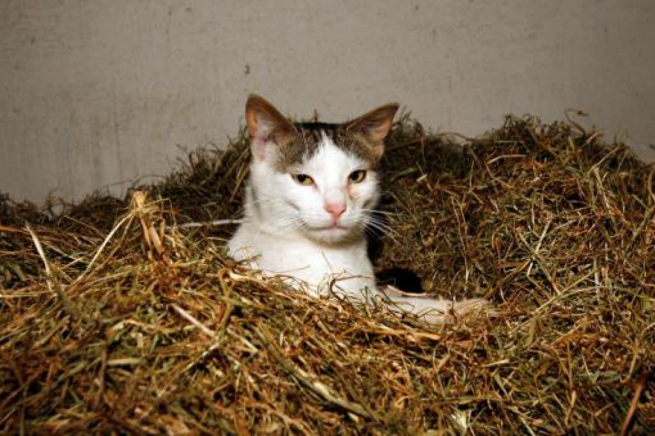 Sąd uniewinnił sołtysa obwinionego o brak nadzoru nad... kotem