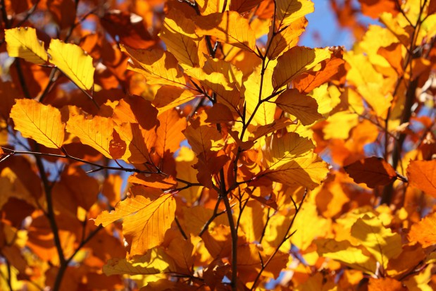 Koniec lata: 22 września rozpoczyna się astronomiczna jesień