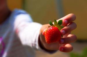 Owoce, warzywa i mleko dla uczniów za darmo