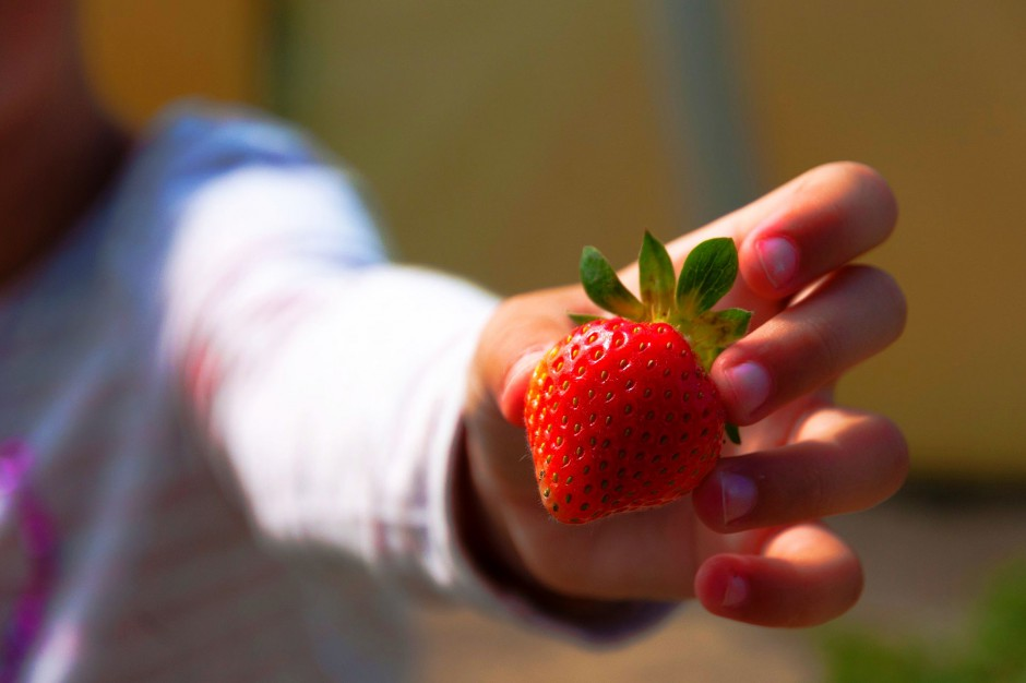 Owoce, warzywa i mleko dla uczniów w szkołach za darmo
