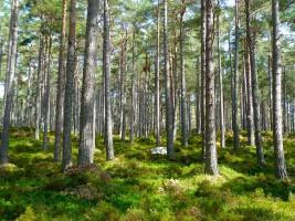 Miliony dla wszystkich 23. parków narodowych w Polsce