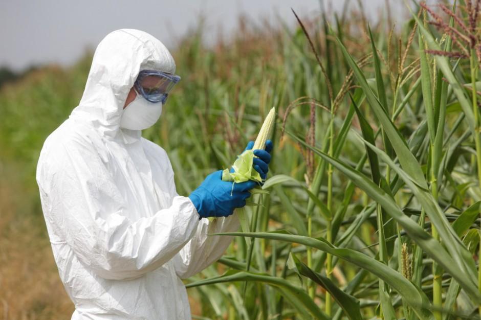Świdwin głosuje ws. GMO. To pierwsze tego typu referendum w Polsce
