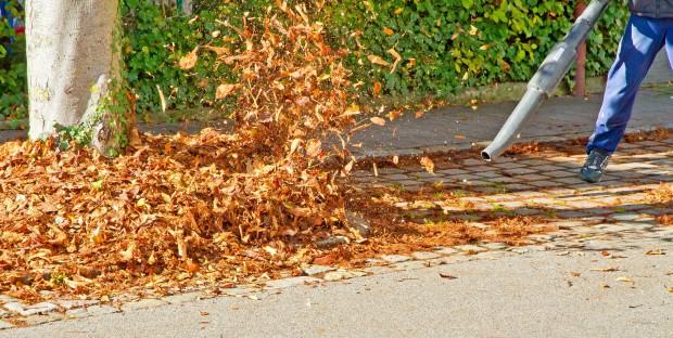 Prokurator w Opolu sprawdzi sposób sprzątania liści
