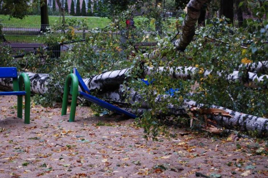 Orkan Ksawery: Kalisz wprowadza zakaz korzystania z placów zabaw i parków