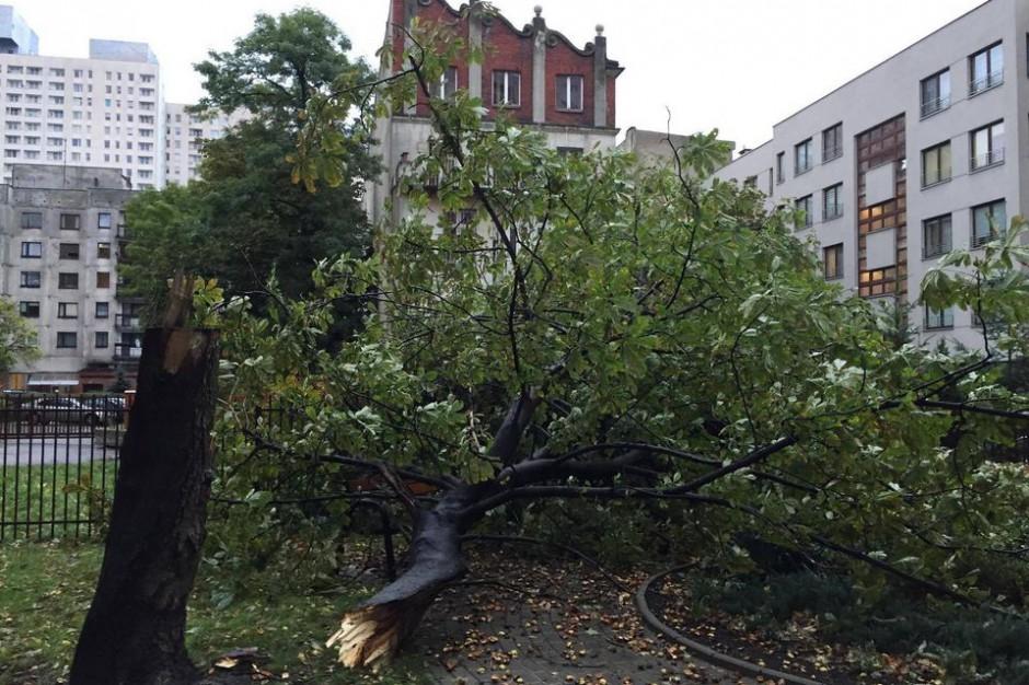 Orkan Ksawery w Łódzkiem. W sobotę bez prądu nadal 53 tys. mieszkańców regionu