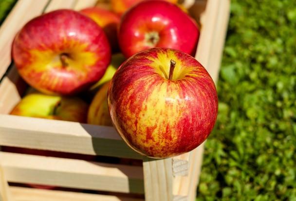 """Lubelskie: Sadownicy chcą promować """"Jabłko Lubelskie"""""""