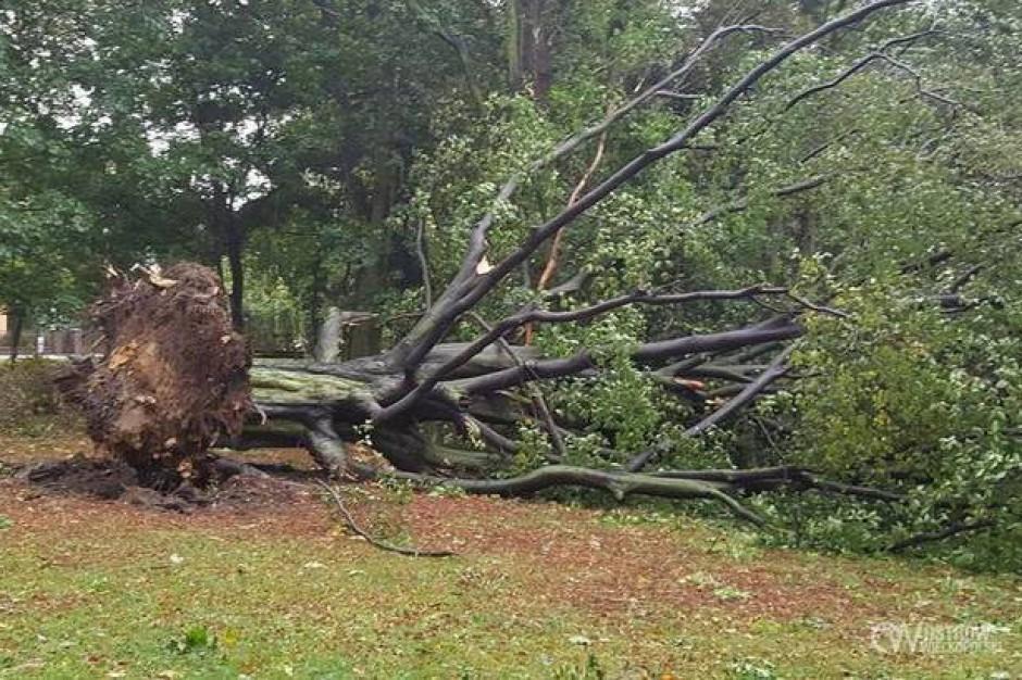 Orkan Ksawery: W woj. lubuskim i wielkopolskim sytuacja poprawia się
