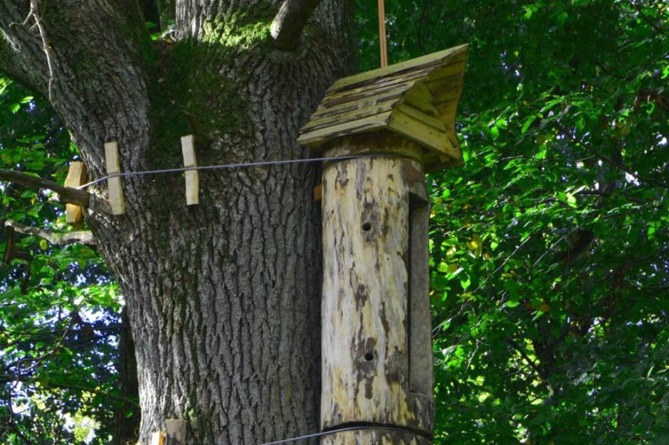 Dzikie pszczoły wrócą do elbląskich lasów