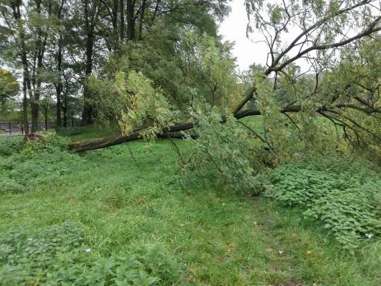 120 tys. zł dla poszkodowanych przez orkan w Wielkopolsce