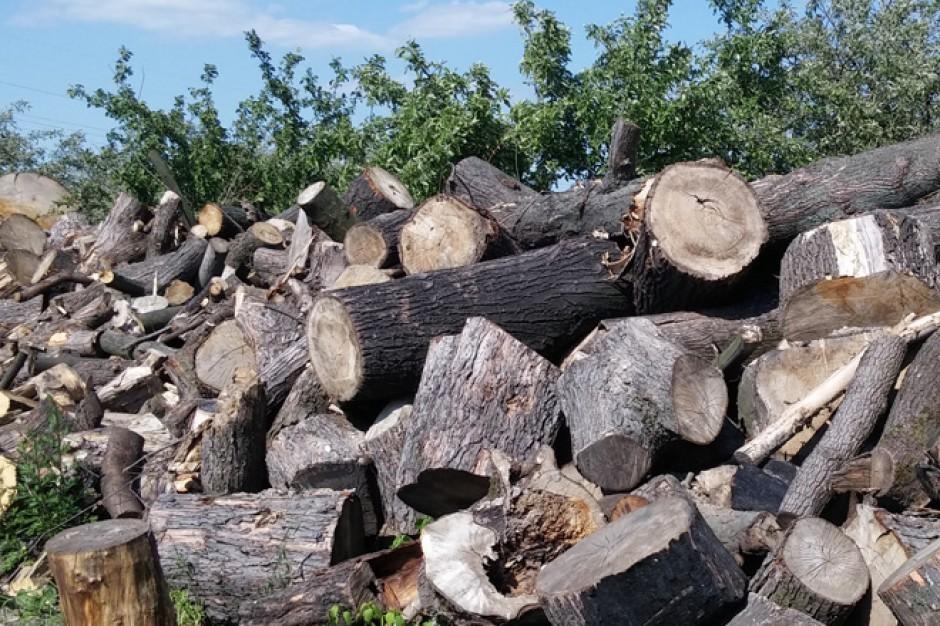 Wycinka drzew powstrzymana przez zmiany w prawie