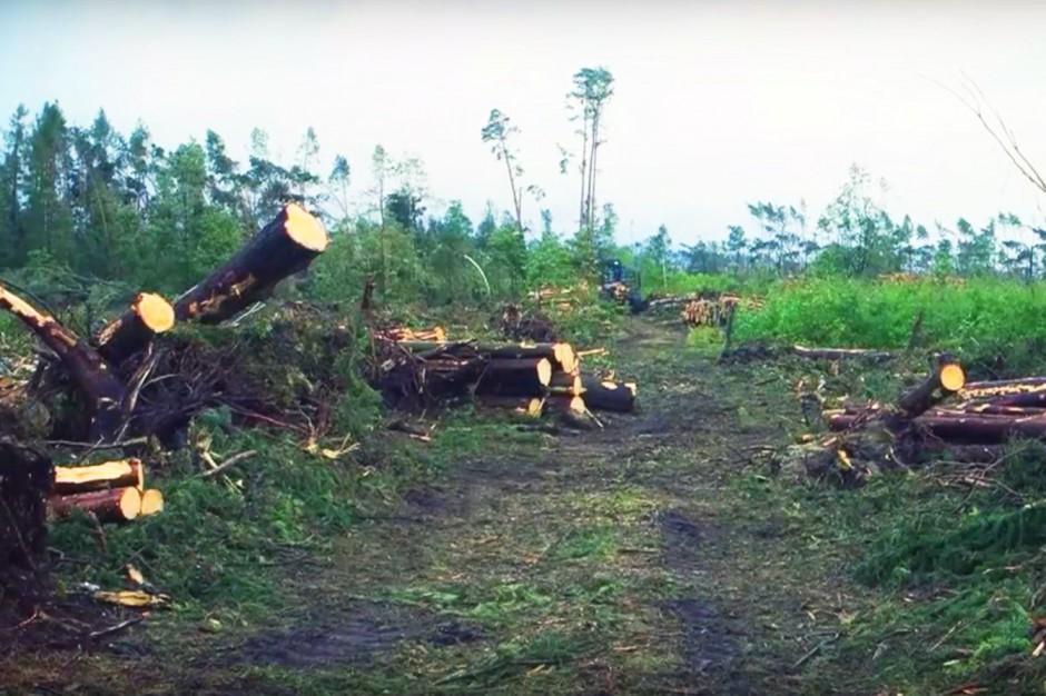 Lasy Państwowe chcą sprzedać drzewa powalone po nawałnicach. Ale jest problem