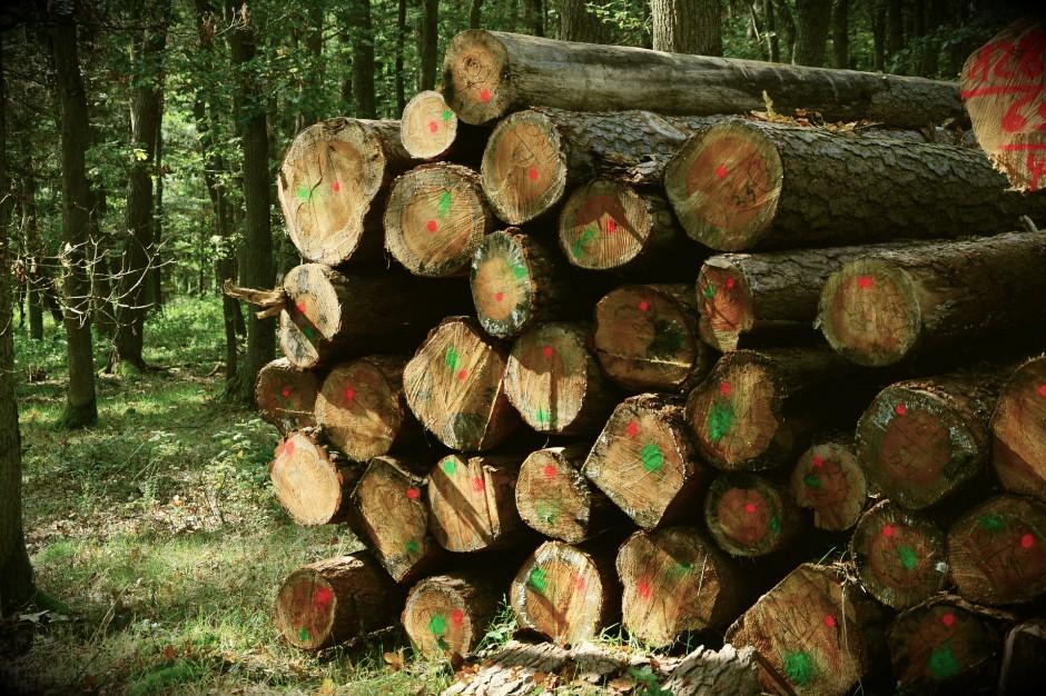 Lasy Państwowe mają plan na 2018 r.