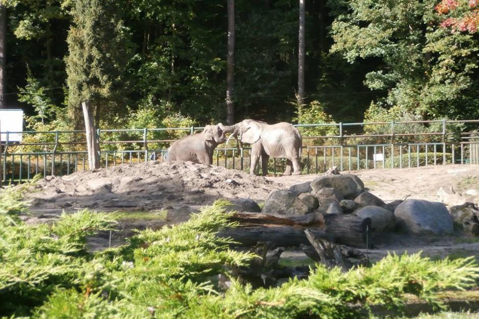 Poznań i Gdańsk. Z powodu wichur zamknięte zoo