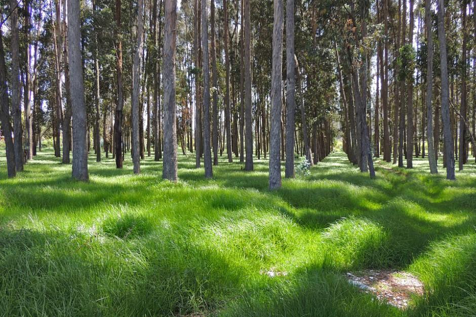 Sosnowiec stara się o zmianę unijnego projektu ws. parków