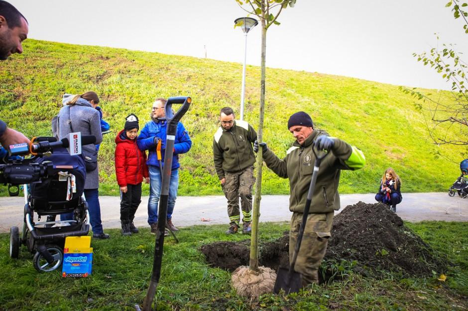 WROśnij - nowy projekt nasadzeń drzew w stolicy Dolnego Śląska