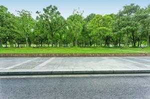 Drzewa w miastach chronią przed groźną chorobą