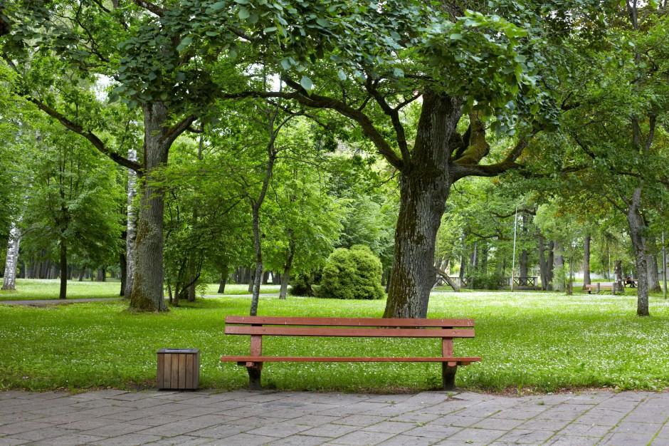 Kraków: Ogród w każdej dzielnicy – nowy pomysł na zieleń w mieście